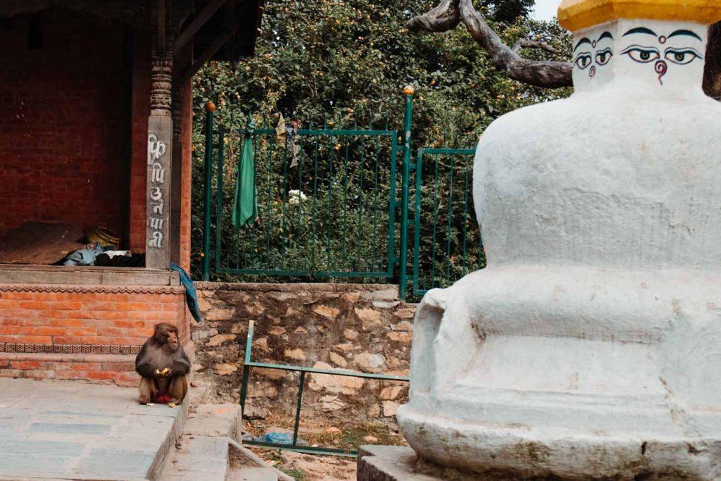 apen Kathmandu