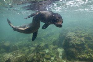zeeleeuwen snorkelen